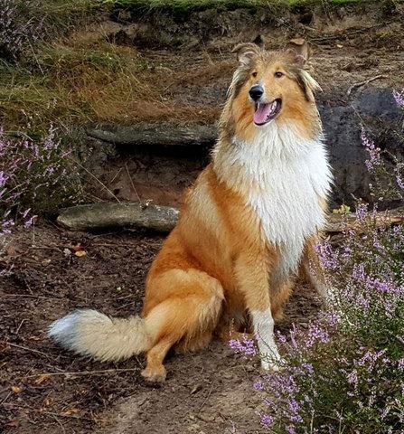 Hond Ingrid